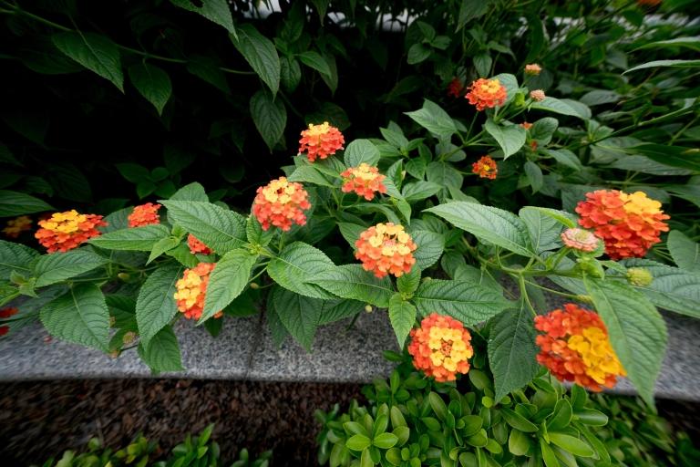 20160823-a7ii-sel1018-flowers