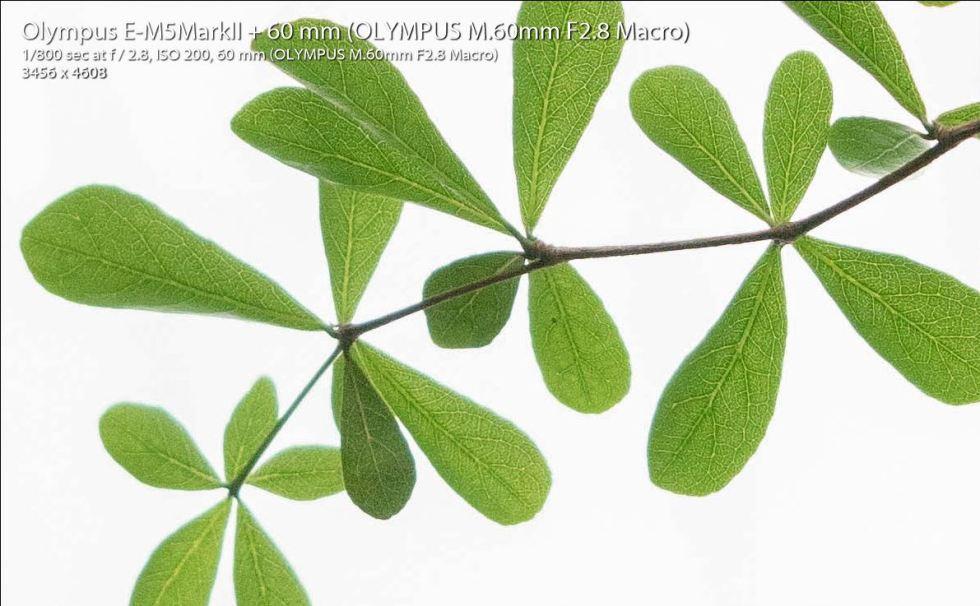 mzuiko60mm_crop2